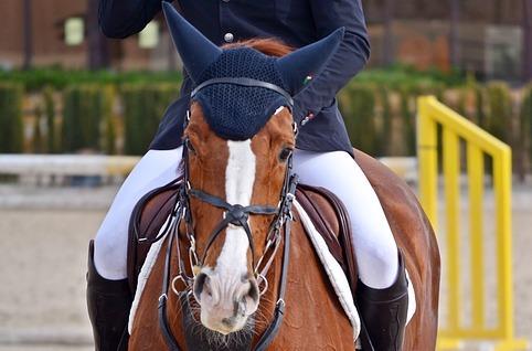 Equitación inteligente: IoT en hípica.