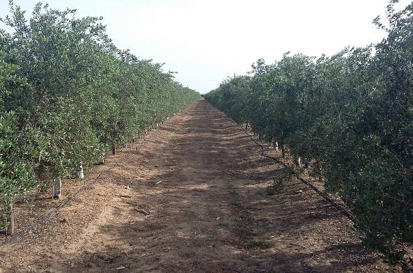 Tepro consigue 30.000 € para su herramienta de decisión de riego en olivares.