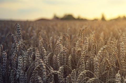 Acceso a las TIC y financiación, frenos de la Agricultura 4.0.