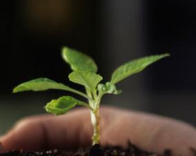Lenovo se fija nuevos objetivos de lucha contra el cambio climático