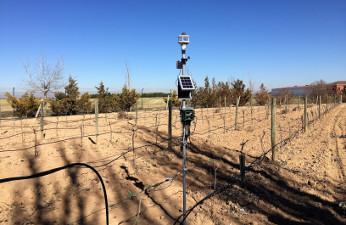 Agricultura 4.0 en Bodegas Martúe.
