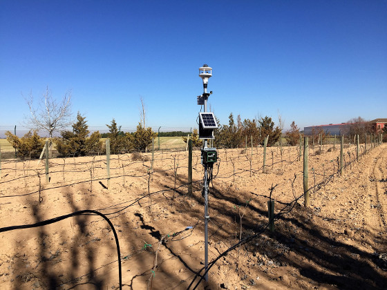 Agricultura 4.0 en Bodegas Martúe