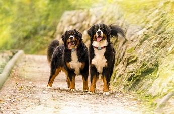 V-Pet Tracker, nuevo localizador de mascotas de Vodafone