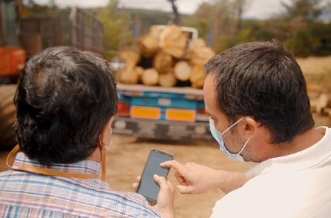 Proyecto ChainWood: blockchain para optimizar el sector forestal español.