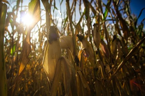 El proyecto MORERA reducirá el empleo del agua en los cultivos un 25%.